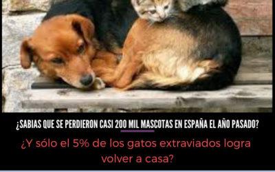 ¿Sabías que cada año se pierden en España 200.000 mascotas?